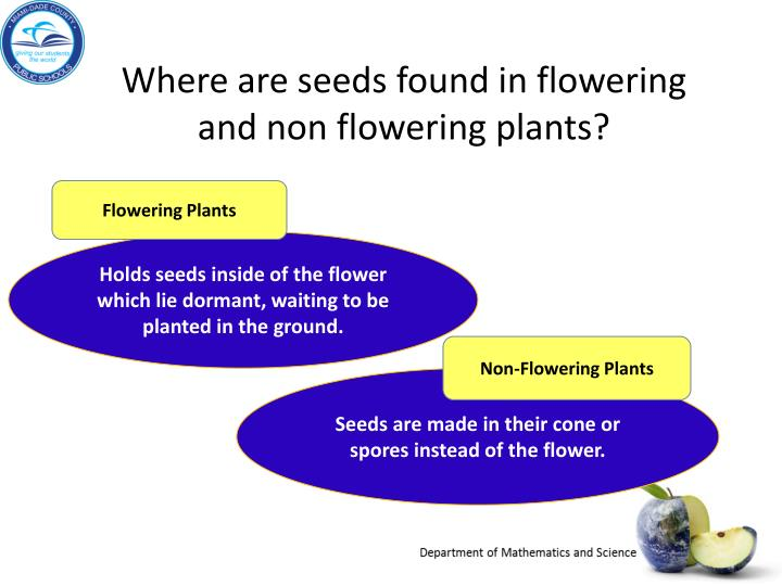 Where are seeds found in flowering and non flowering plants?