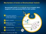 mechanism of action of brentuximab vedotin