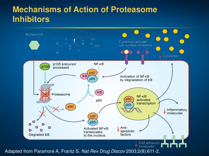 Mechanisms of Action of Proteasome Inhibitors