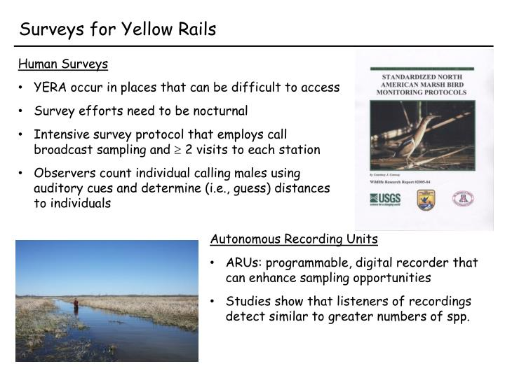 Surveys for yellow rails