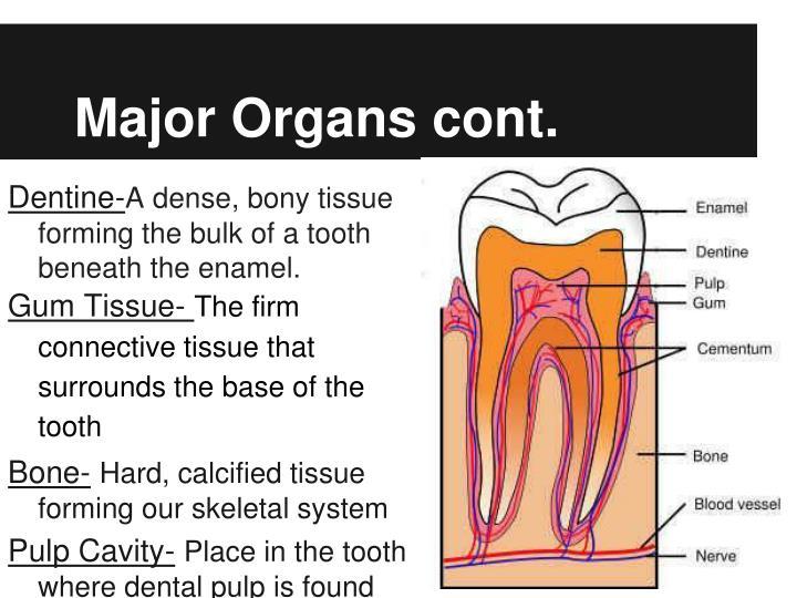 Major Organs cont.
