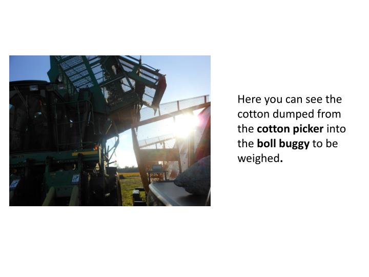 Here you can see the cotton dumped from the