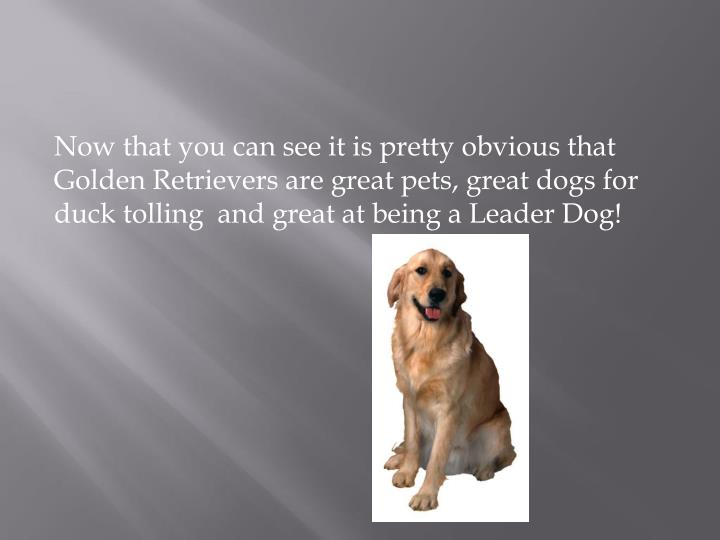 Now that you can see it is pretty obvious that Golden Retrievers are great pets, great dogs for duck tolling  and great at being a Leader Dog!