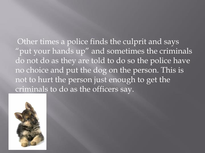 """Other times a police finds the culprit and says """"put your hands up"""" and sometimes the criminals do not do as they are told to do so the police have no choice and put the dog on the person. This is not to hurt the person just enough to get the criminals to do as the officers say."""