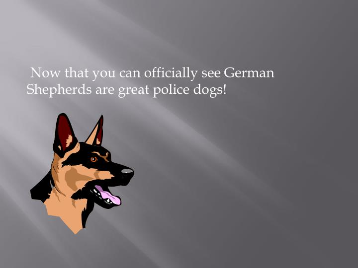 Now that you can officially see German Shepherds are great police dogs!
