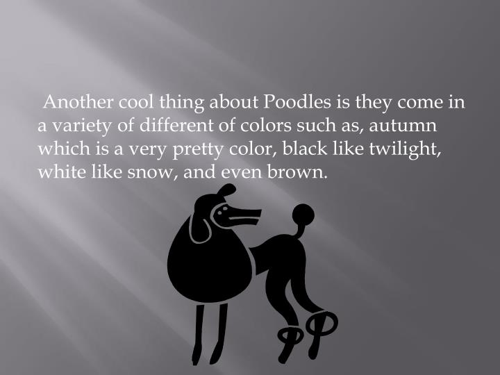 Another cool thing about Poodles is they come in a variety of different of colors such as, autumn which is a very pretty color, black like twilight, white like snow, and even brown.