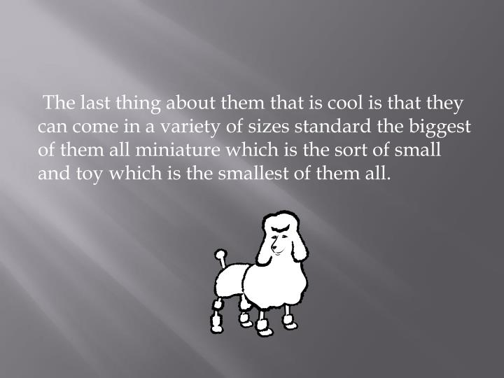 The last thing about them that is cool is that they can come in a variety of sizes standard the biggest of them all miniature which is the sort of small and toy which is the smallest of them all.
