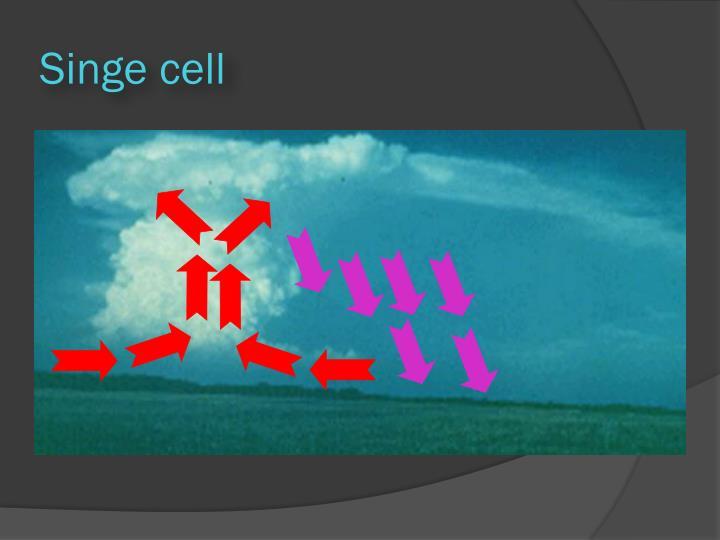 Singe cell