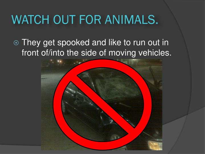 WATCH OUT FOR ANIMALS.
