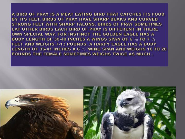 A bird of pray is a meat eating bird that catches its food by its feet. Birds of pray have sharp beaks and curved strong feet with sharp talons. Birds of pray sometimes eat other birds each bird of pray is different in there own special way. For instinct the golden eagle has a body length of 30-40 inches a wings span of 6 ½ to 7 ½ feet and weighs 7-13 pounds. A harpy eagle has a body length of 35-41 inches a 6 ½  wing span and weighs 10 to 20 pounds the female sometimes weighs twice as much .