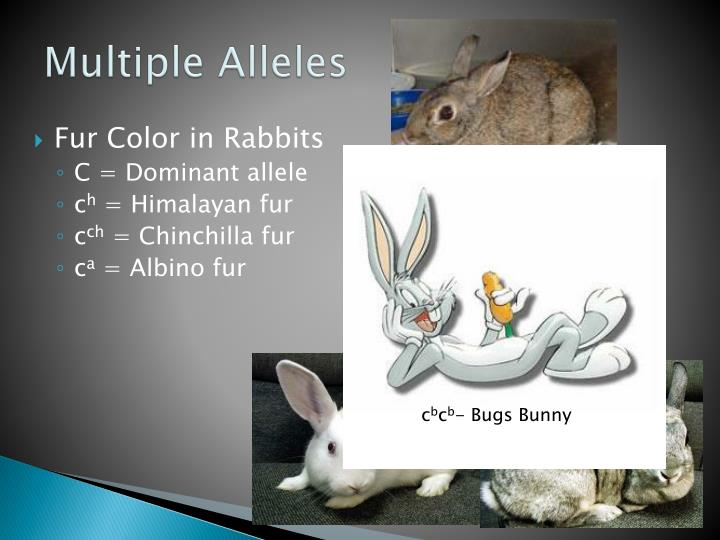 PPT - Patterns of Heredity and Human Genetics PowerPoint ...