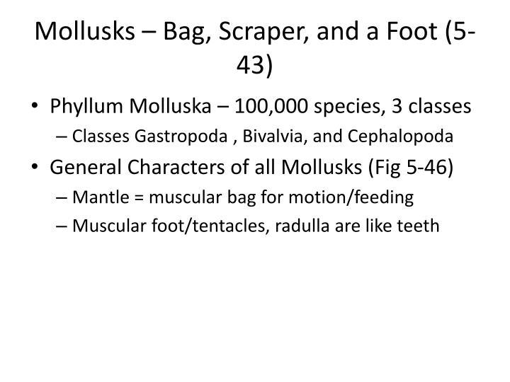 Mollusks – Bag, Scraper, and a Foot (5-43)