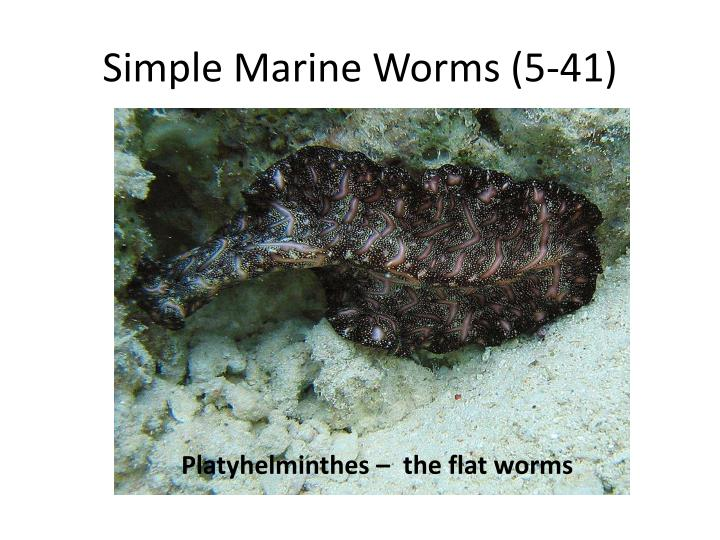 Simple Marine Worms (5-41)