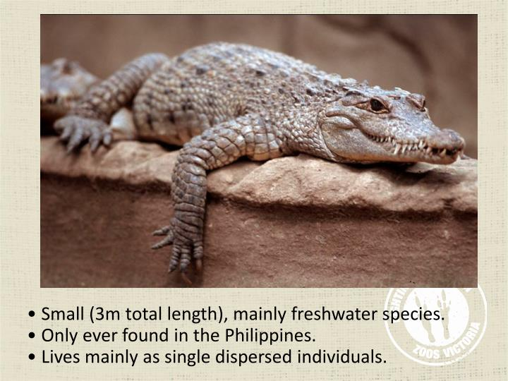 Small (3m total length), mainly freshwater species.