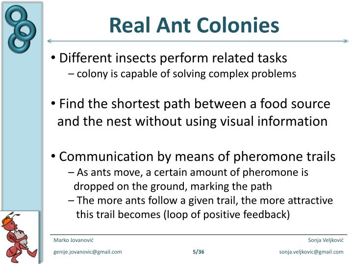 Real Ant Colonies