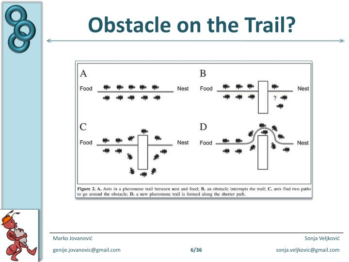 Obstacle on the Trail?