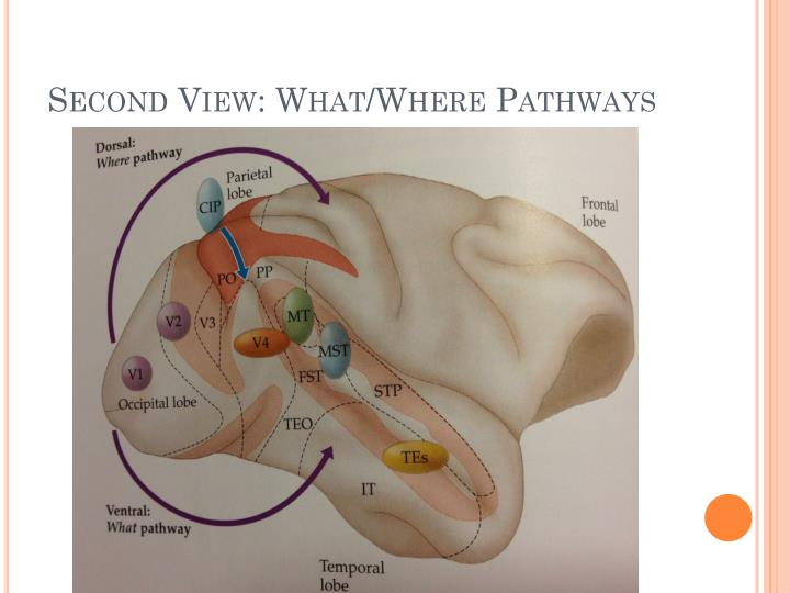 Second View: What/Where Pathways
