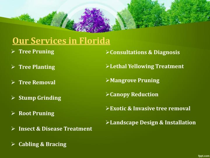 Our Services in Florida