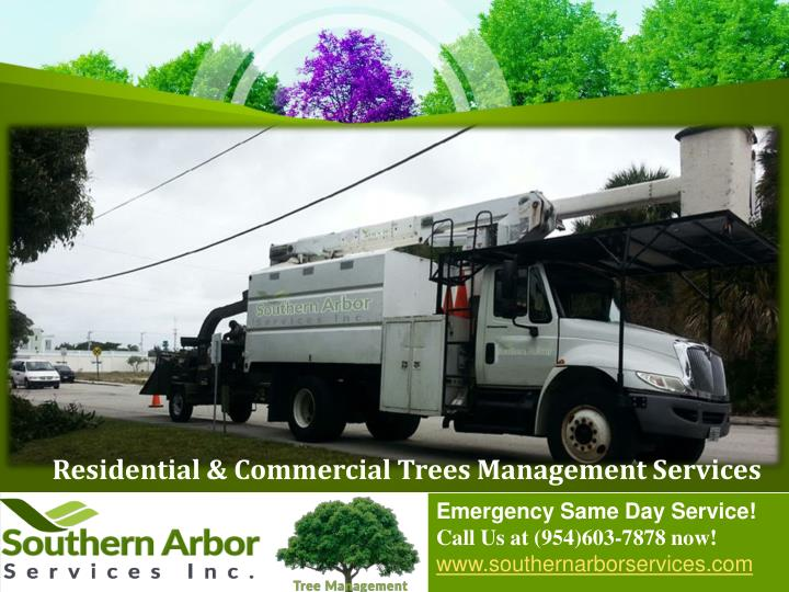 Residential & Commercial Trees Management