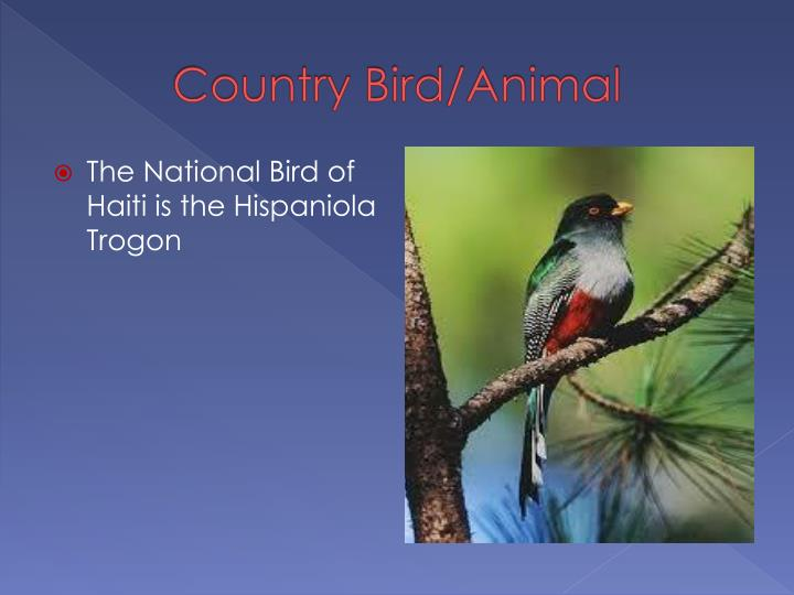 Country Bird/Animal