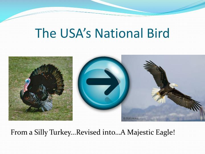 The usa s national bird