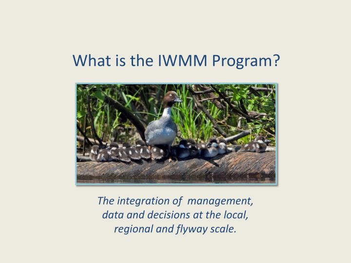 What is the IWMM Program?