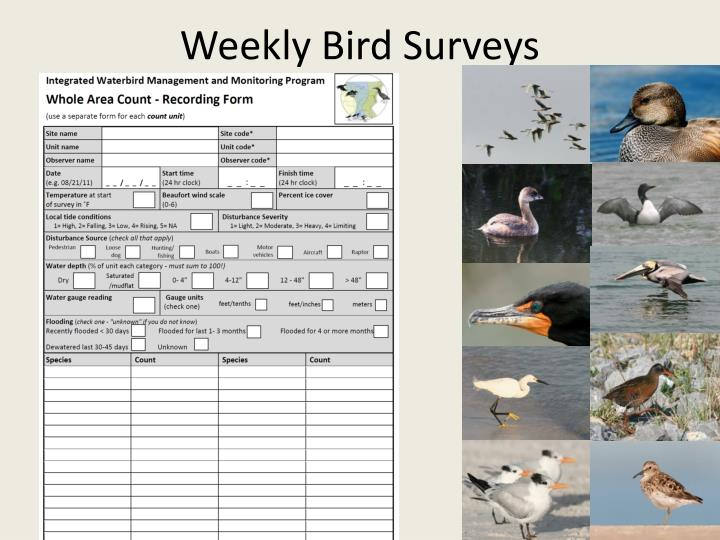 Weekly Bird Surveys
