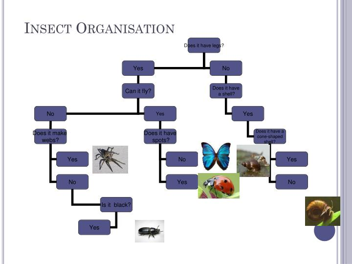 Insect Organisation
