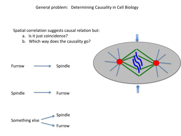General problem:   Determining Causality in Cell Biology