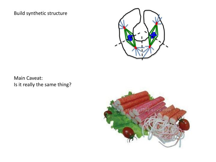 Build synthetic structure