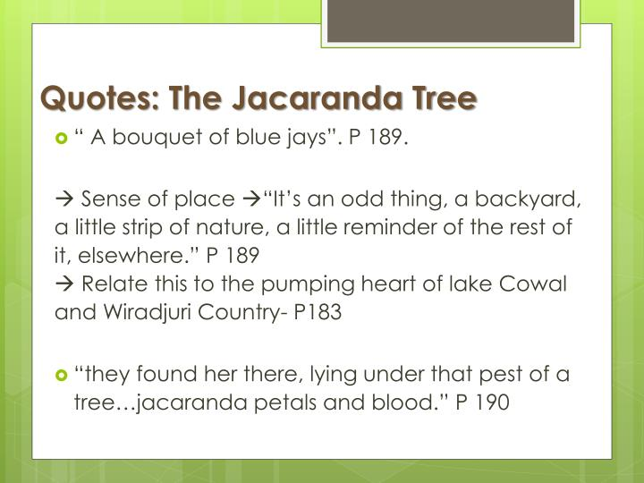 Quotes: The Jacaranda Tree