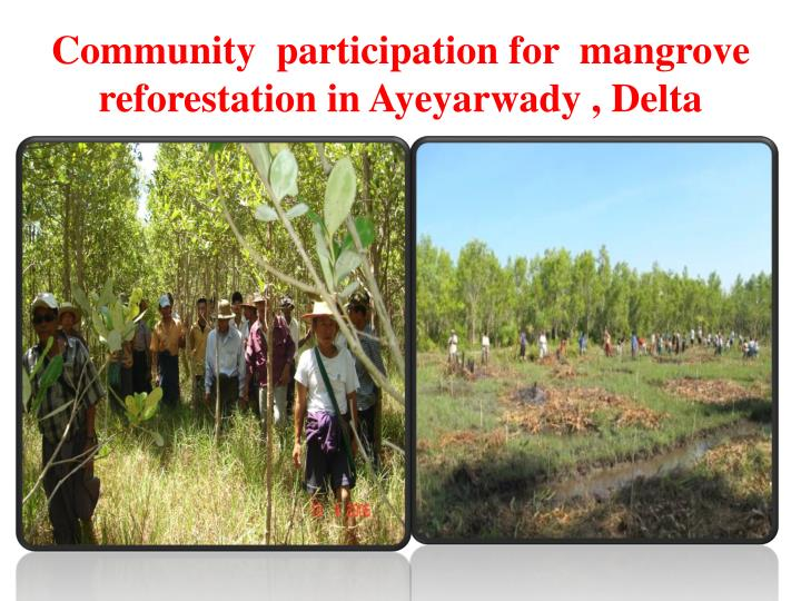 Community  participation for  mangrove reforestation in
