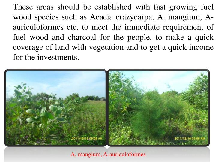 These areas should be established with fast growing fuel wood species such as Acacia