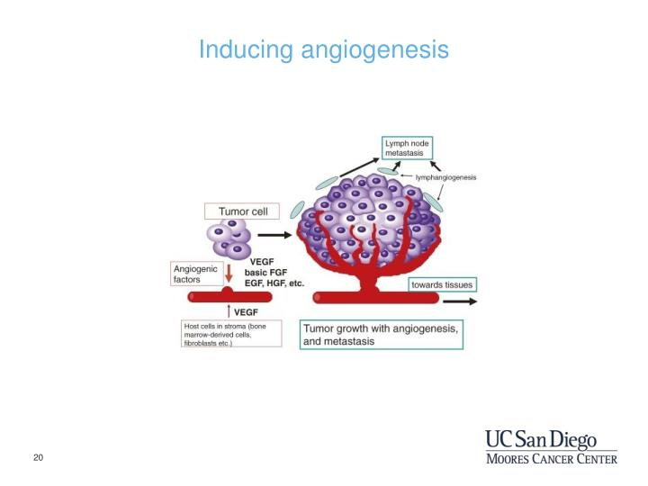 Inducing angiogenesis