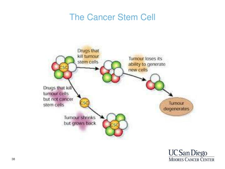 The Cancer Stem Cell