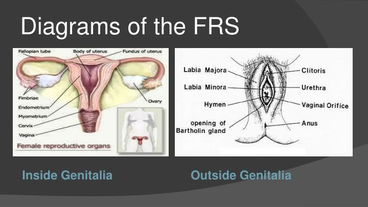 Diagrams of the FRS