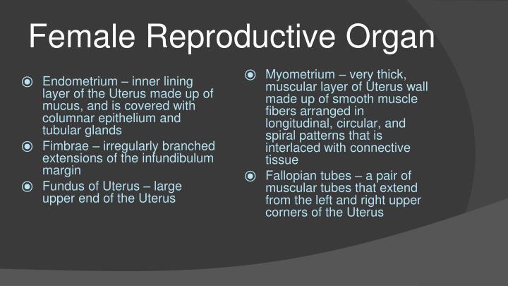 Female Reproductive Organ