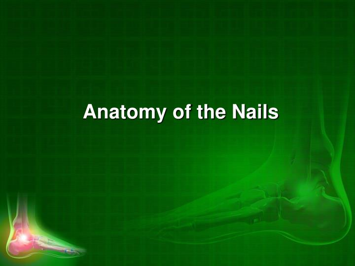 Anatomy of the Nails