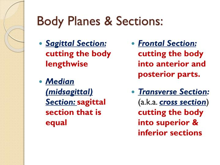 Body Planes & Sections: