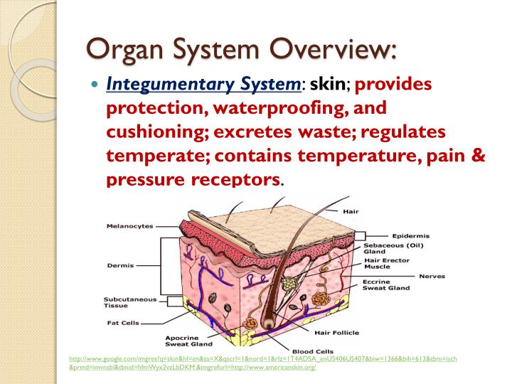 Organ System Overview: