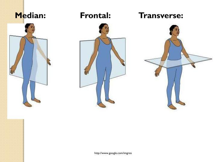 Median:Frontal:       Transverse:
