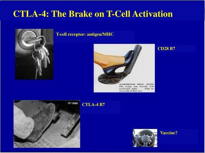 T-cell receptor: antigen/MHC