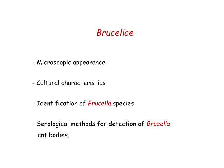 Brucellae