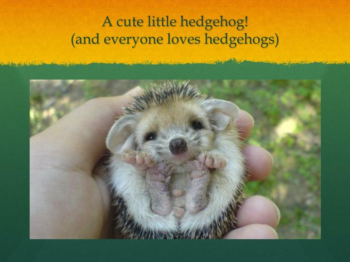A cute little hedgehog!