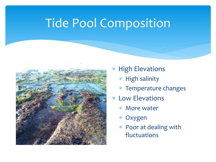 Tide Pool Composition