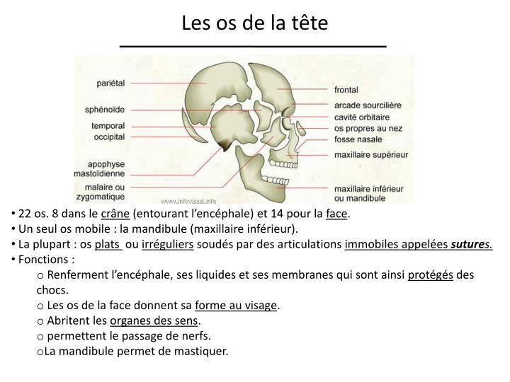 Les os de la tête