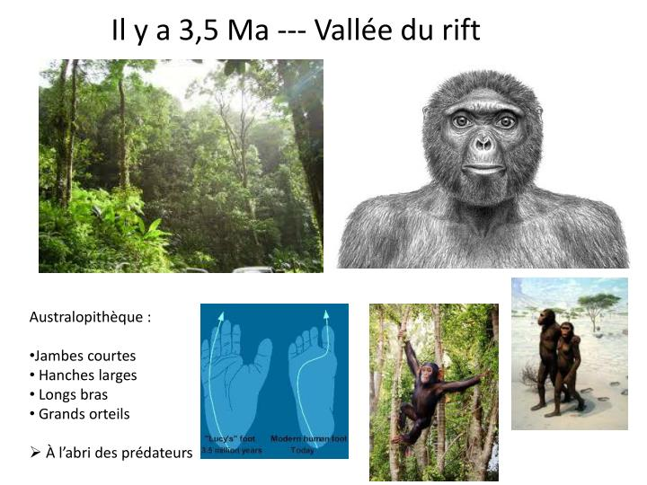 Il y a 3,5 Ma --- Vallée du rift