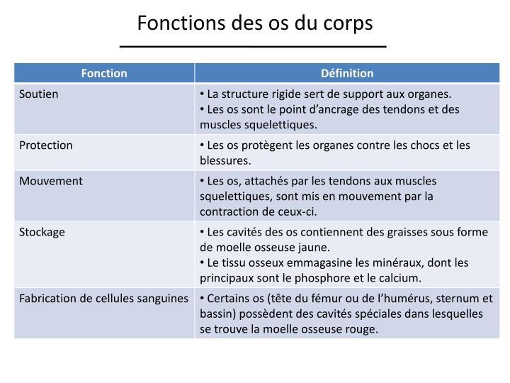 Fonctions des os du corps