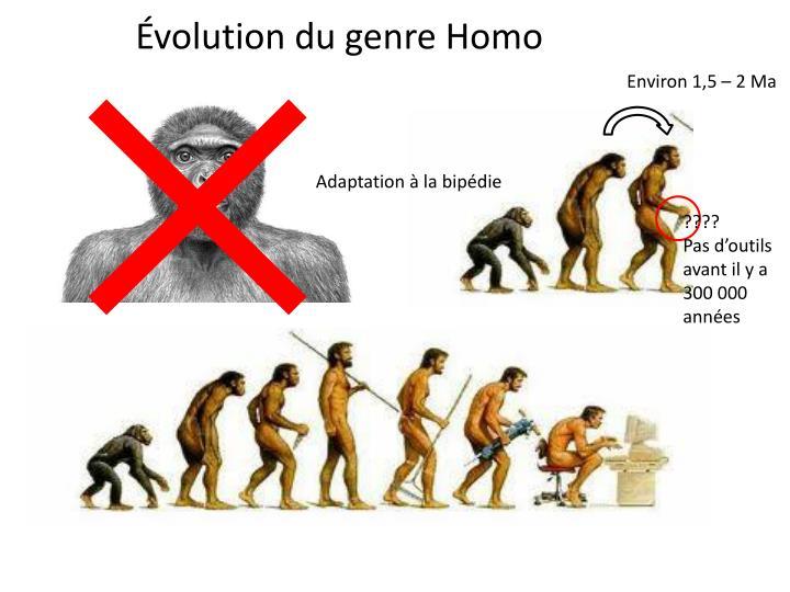 Évolution du genre Homo