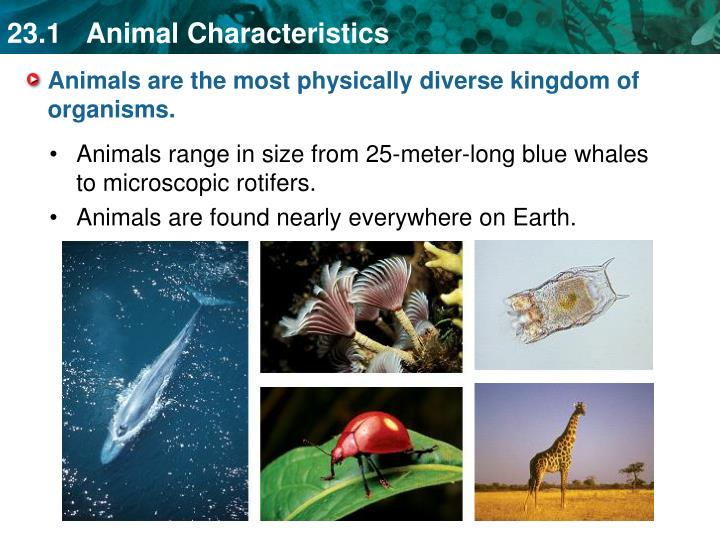 Animals are the most physically diverse kingdom of organisms.